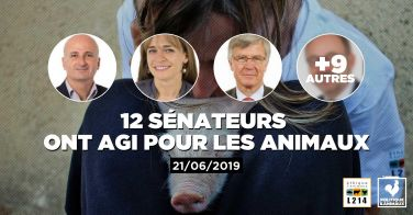 Logo 12 sénateurs demandent un renforcement des normes encadrant l'élevages des poulets